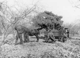 Diversos agricultors amb un carro i un cavall